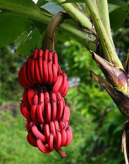 Fruits - Nutritional Value Of 7 Key #Fruits #Food #FrizeMedia