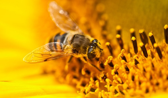 When it comes to young and beautiful skin, bee pollen has outstanding gifts. FrizeMedia
