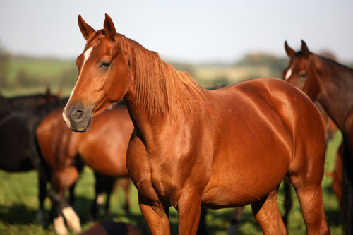 #Horses - #Equine Buying And Selling On The Internet #FrizeMedia #SEO
