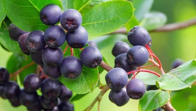 #AcaiBerry - #Health And #WeightLoss #Benefits #FrizeMedia