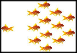 Influncer Marketing - Beat A New Path