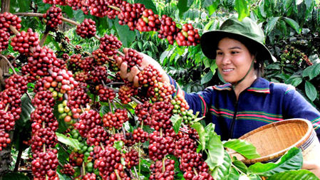 History Of Coffee - Coffee Cultivation - FrizeMedia - Digital Marketing And Advertising - Charles Friedo Frize