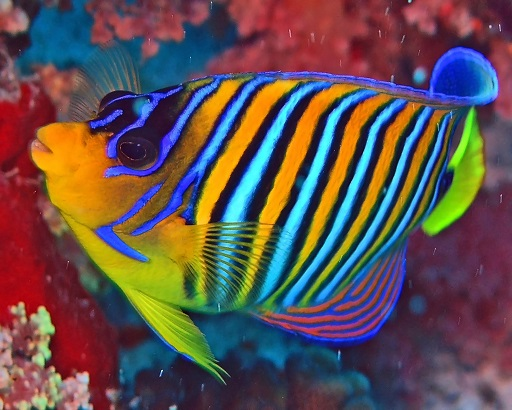 Starting Out With Fish #FrizeMedia #PetsForHome #Kids