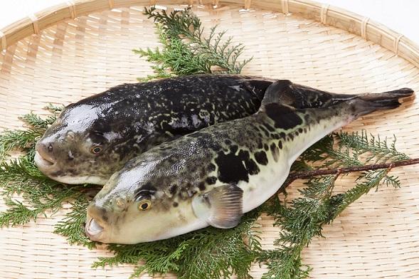 #Fugu - The Risky Fish #food #seafood #Japanese #foodie #FrizeMedia