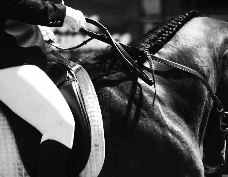 #PlaceYourAd - Advertise With #FrizeMedia #Horse #Equine Directory