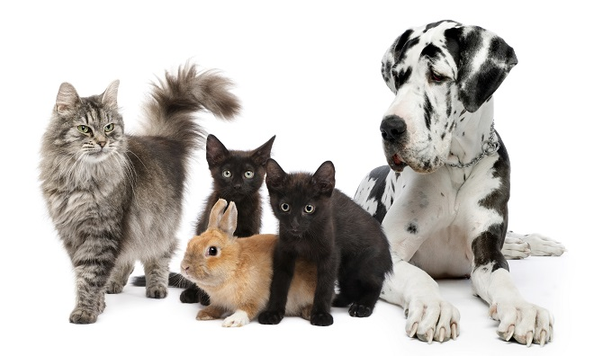 #Pets - Why Your Kids Should Have Them #animals #FrizeMedia