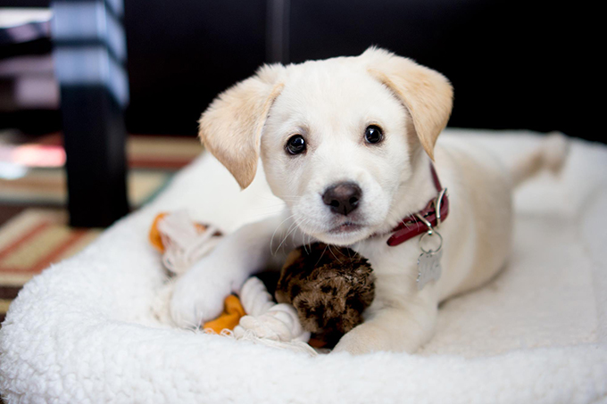 Pets And Why Your Kids Should Have Them #FrizeMedia