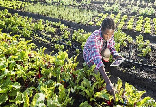 [South Africa] Founders Factory Africa partners with Small Foundation to Champion digitization of Agriculture #FrizeMedia